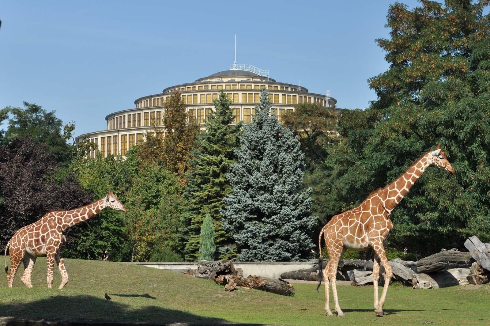Hala Stulecia widziana z wrocławskiego zoo, Hala Stulecia, Wrocław Zoo Wrocław