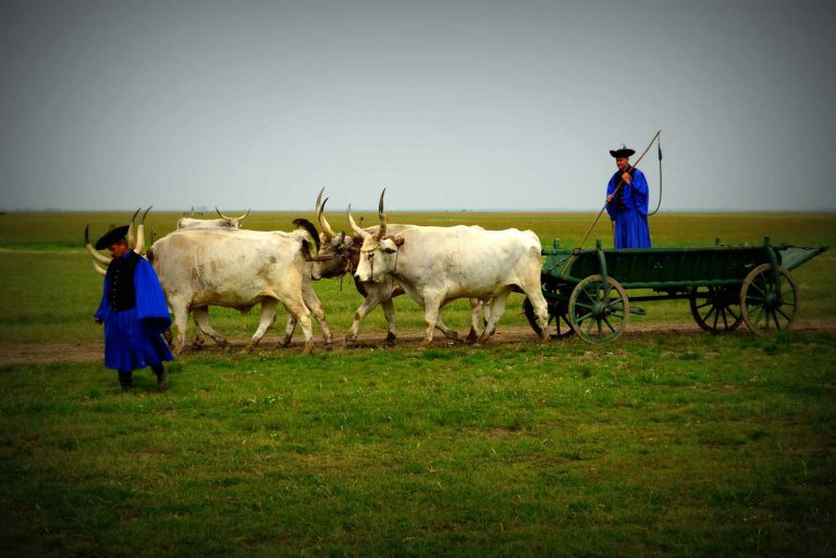 Tradycyjni pasterze węgierskiej Puszty